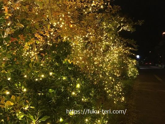 照葉クリスマスイルミネーション