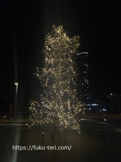 イルミネーション クリスマス照葉